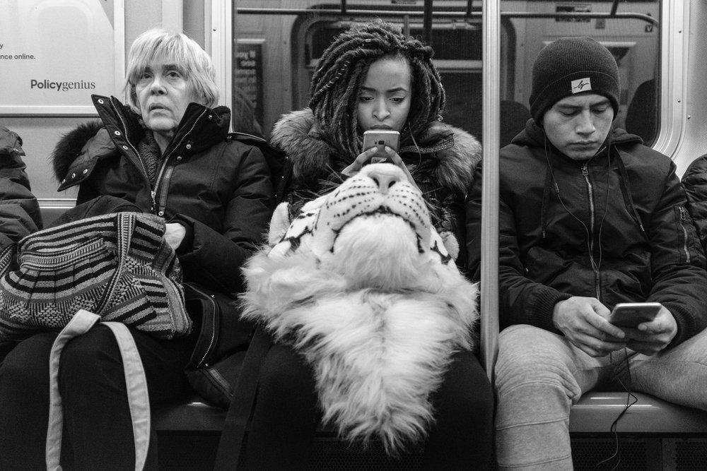 Lion head rucksack - © Gisele Duprez Photography
