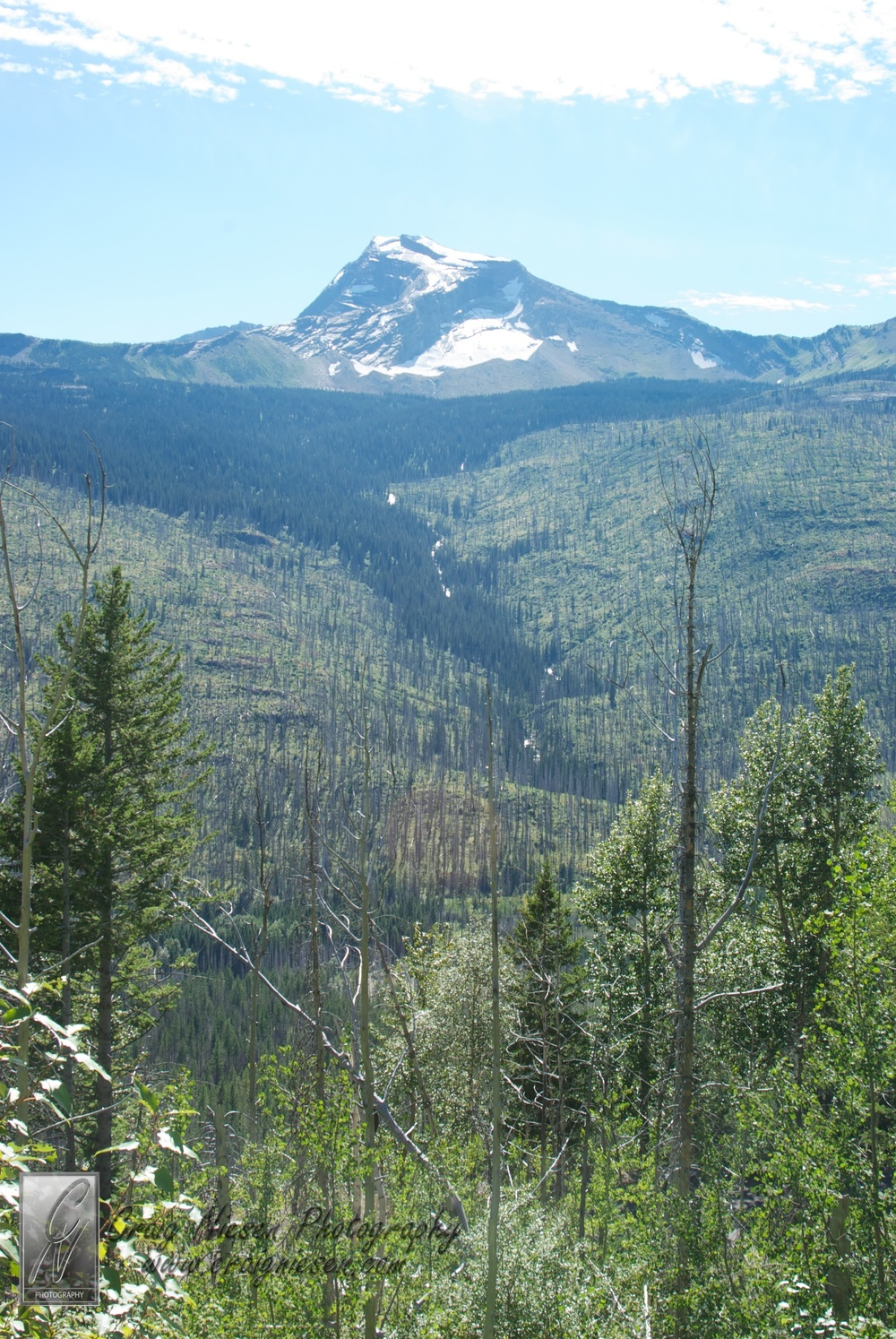Heavens Peak and Results of Pine Beatles, Glacier National Park (Shelley)