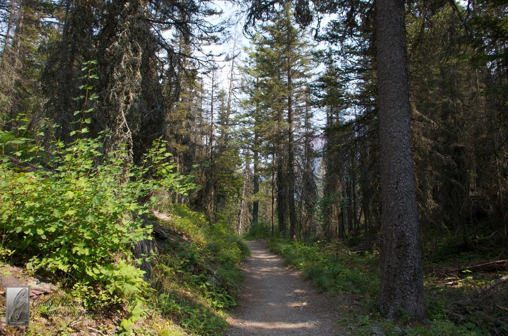 Hiking Trail from Bering Falls to Sun Point Trailhead, Glacier National Park
