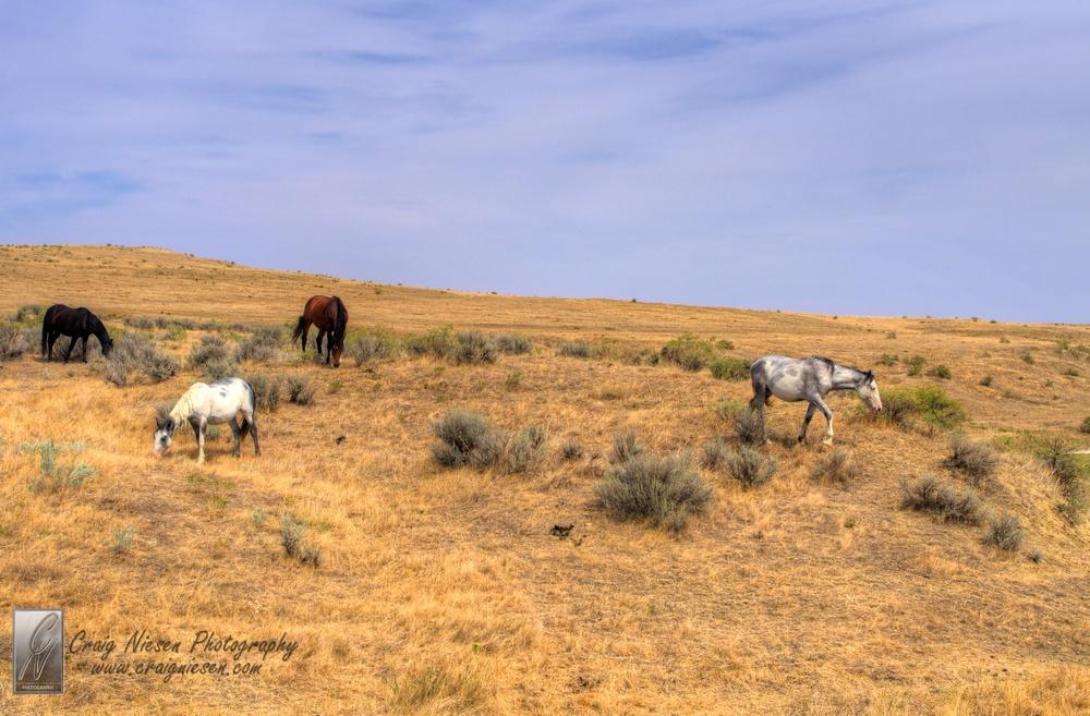 Little Bighorn National Battlefield Monument