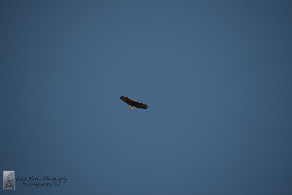 Birds in Parkville-2330.jpg
