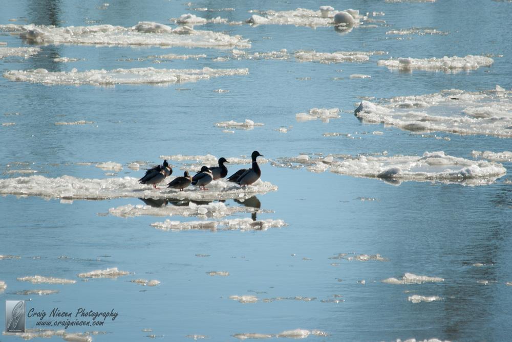 Birds in Parkville-3558.jpg