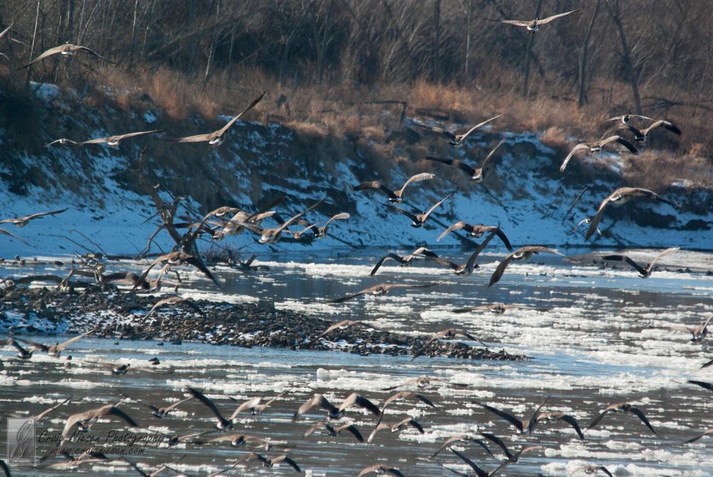 Birds in Parkville-3637.jpg