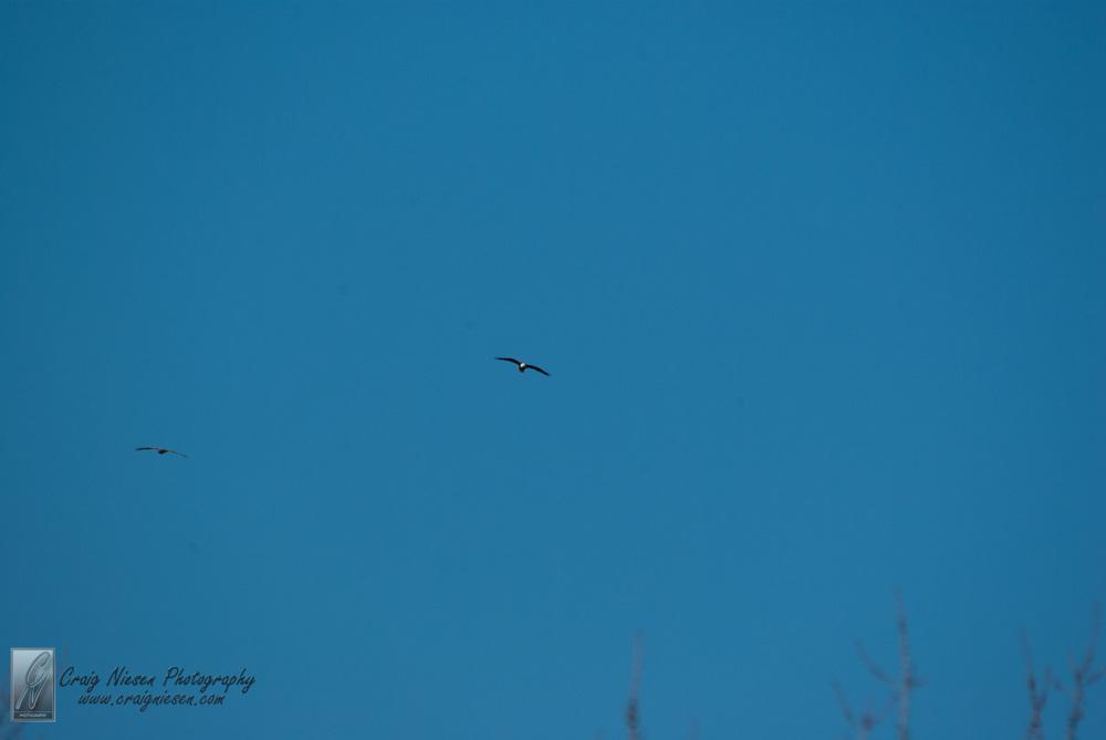 Birds in Parkville-3671.jpg