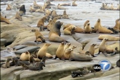 pic -- sea lions vs. fishermen.jpg