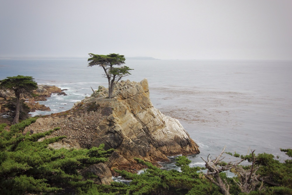 The Lone Cypress along 17 Mile Drive.