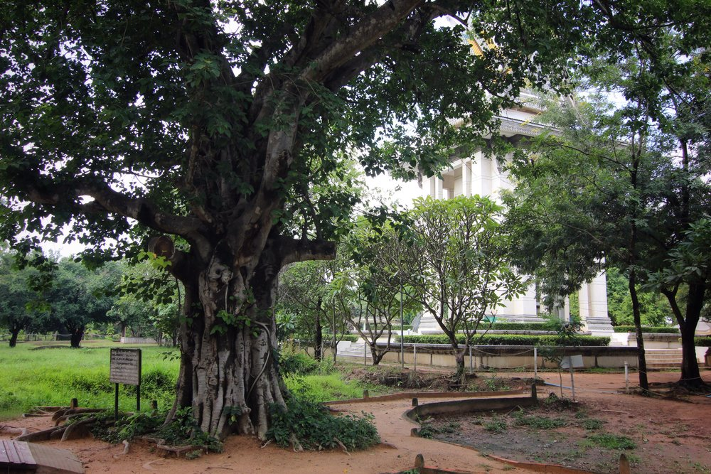 Soldiers hung speakers from this tree to drown out the sounds of the victims. The stupa containing excavated remains is visible in the background.