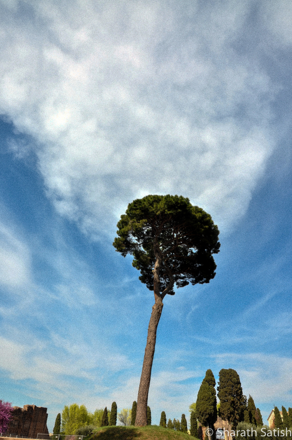 A smoking tree on Palatine Hill. Not a permanent exhibit. :)