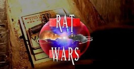 dp-coming-soon-to-a-tv-newscast-near-you-rat-w-001.jpeg