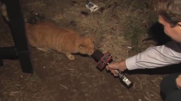 Reporter-interviews-cat-615x345.png