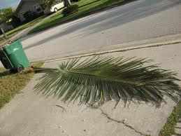 palm-frond-falling.jpg