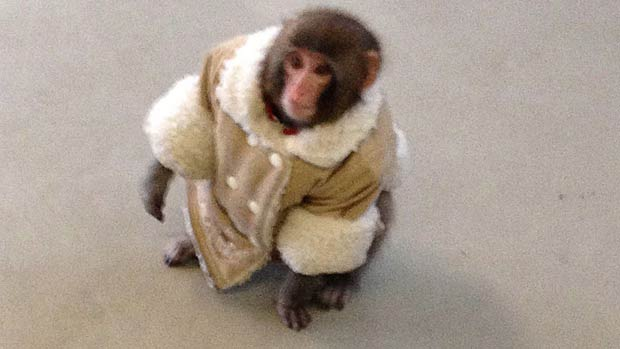ikea-monkey-jr-121012.jpg