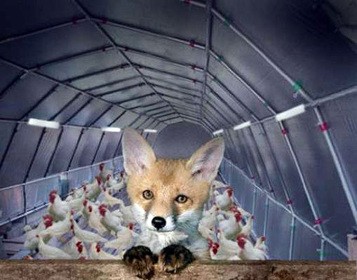 fox-guarding-the-hen-house.jpg