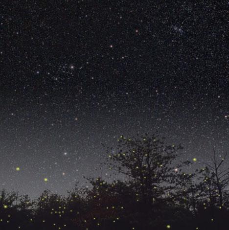 12. fireflies-2.jpg