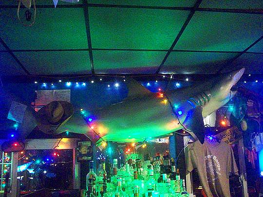 14. sharkoverhead_july24.jpg