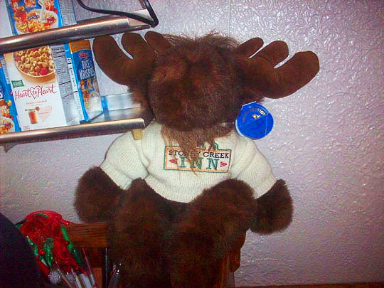 13. moose-dec17.jpg