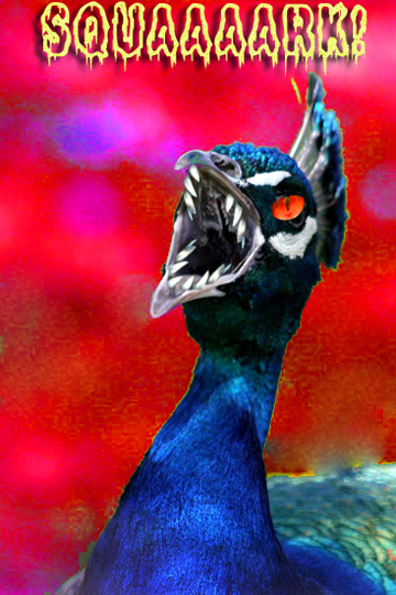peacock-Dec18.jpg