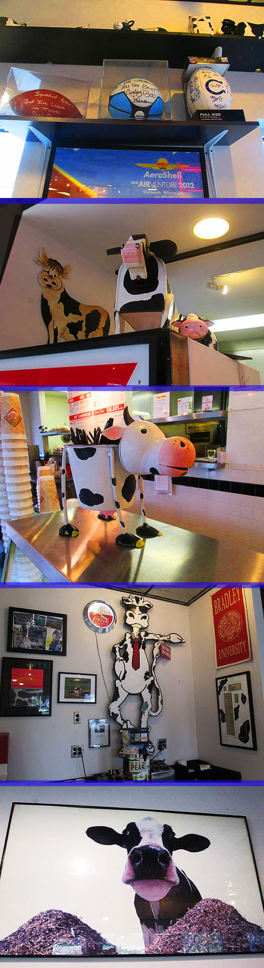 6. cows_august22-17.jpg