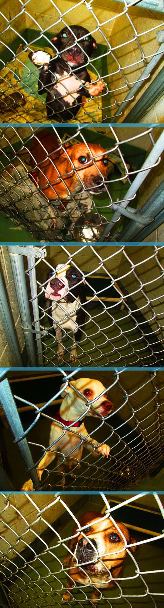 9. dogs_sept13-17.jpg