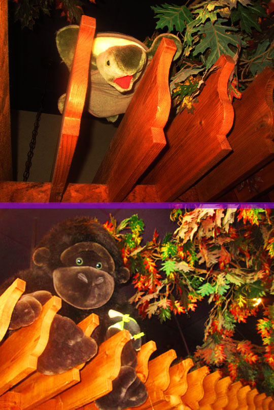 7b. rafters_march13-18.jpg