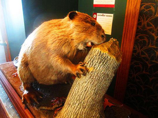 19. beaver_may15-18.jpg