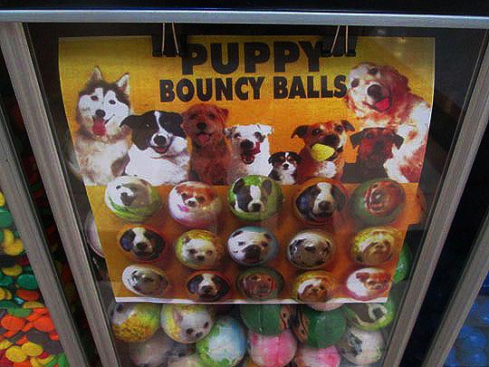 8. puppyballs_jan16-19.jpg