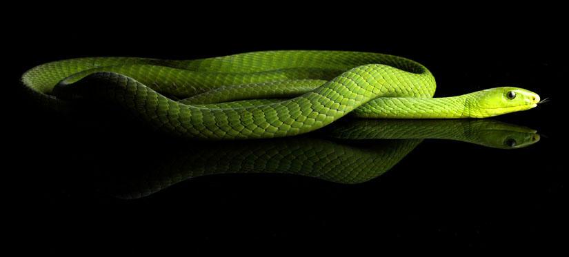 symantec snake 2 ip3 copy.jpg