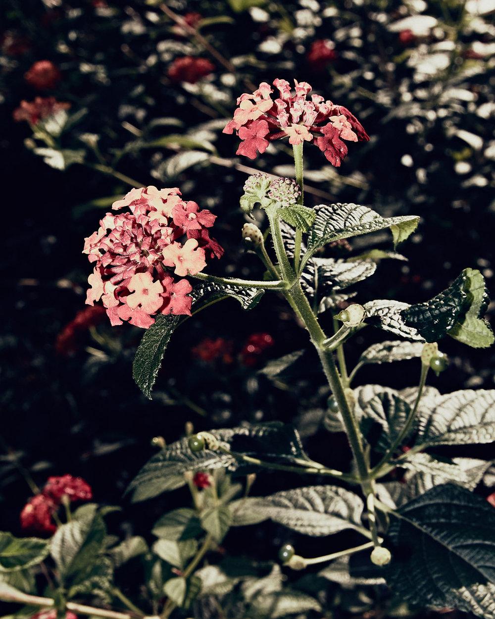 GregoryWaldo_Flora-3.jpg