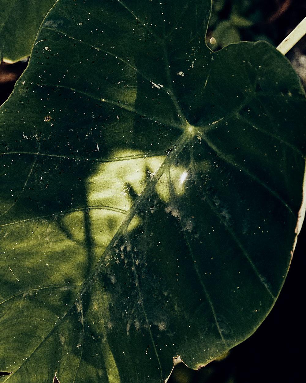 GregoryWaldo_Flora-4.jpg