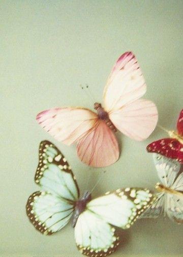Danielle Cohen Butterflies.jpg