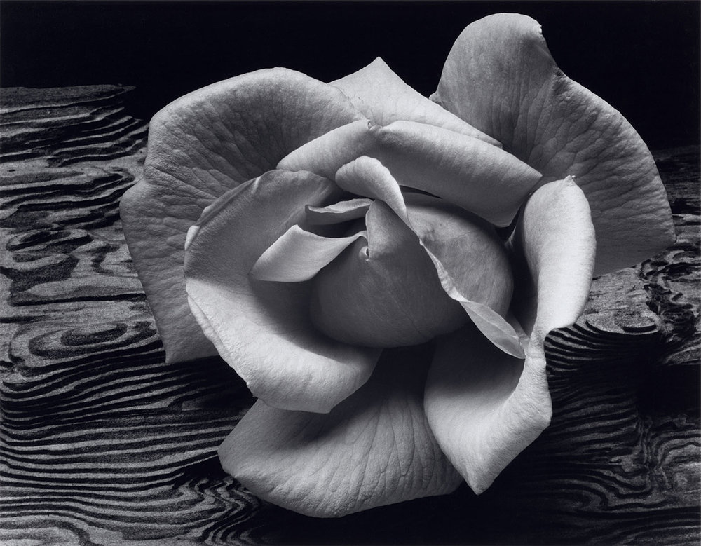 Rose-and-Driftwood-1617x1260 - Ansel Adams.jpg