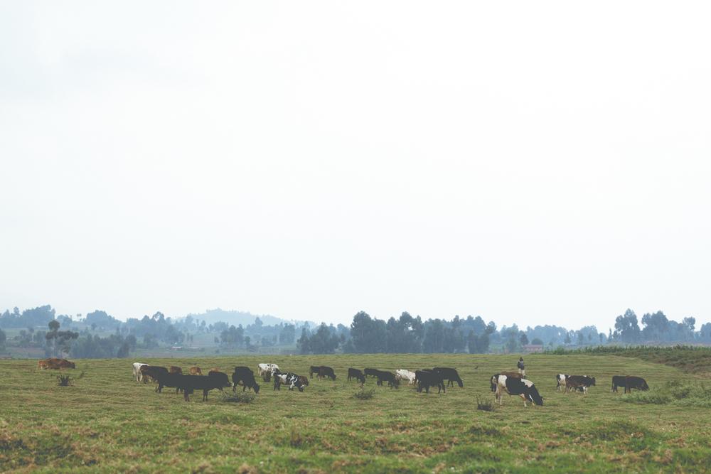 rwanda-111.jpg