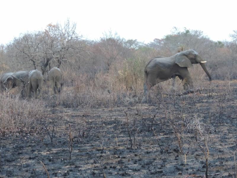 animal-elephant-1.jpeg