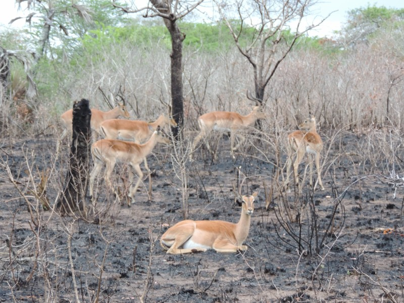 animal-gazelle-1.jpeg