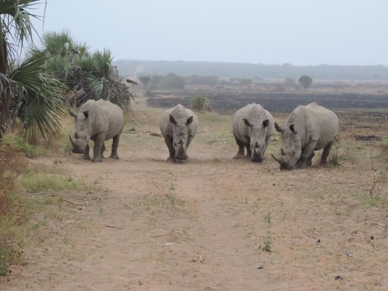 animal-rhino-2.jpeg