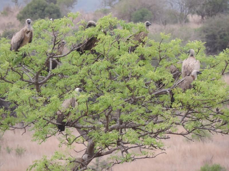 animal-bird-3.jpeg