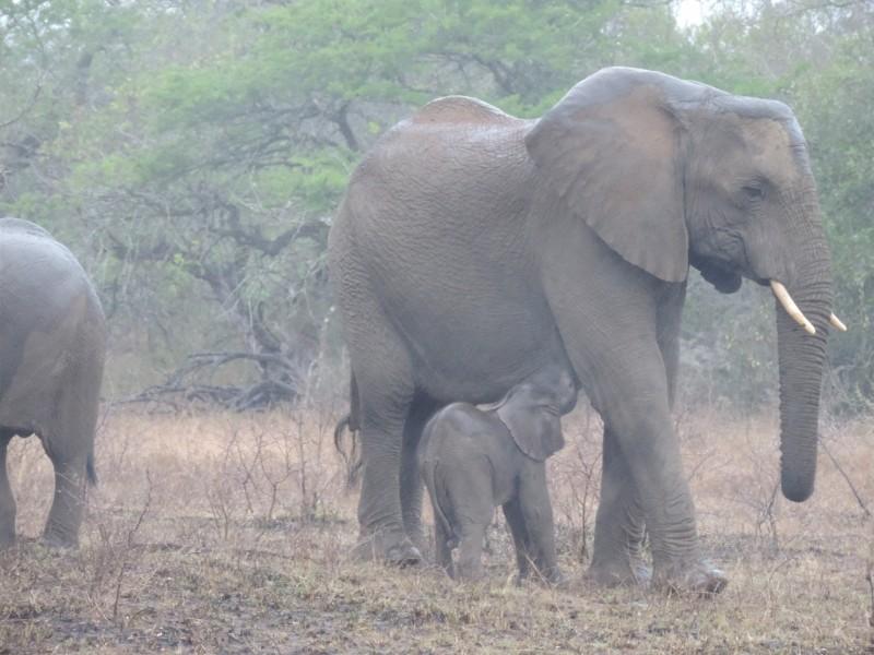 animal-elephant-2.jpeg