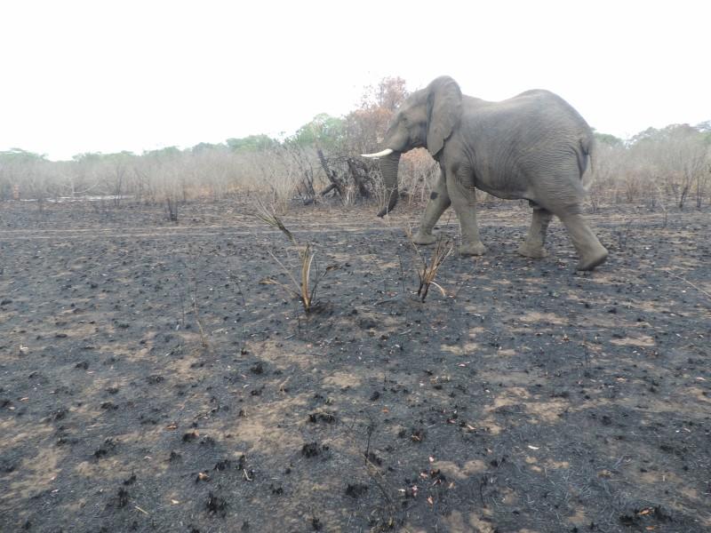 animal-elephant-3.jpeg