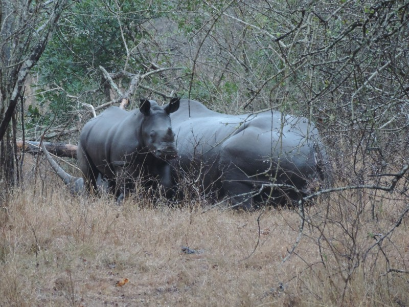 animal-rhino-1.jpeg