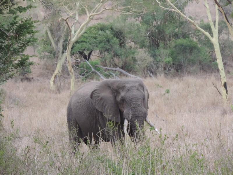 animal-elephant-6.jpeg