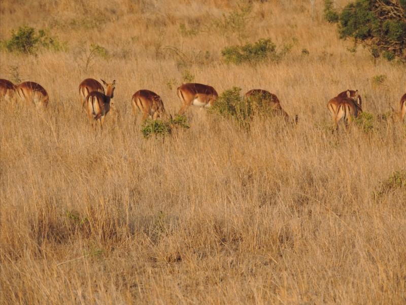animal-gazelle-2.jpeg