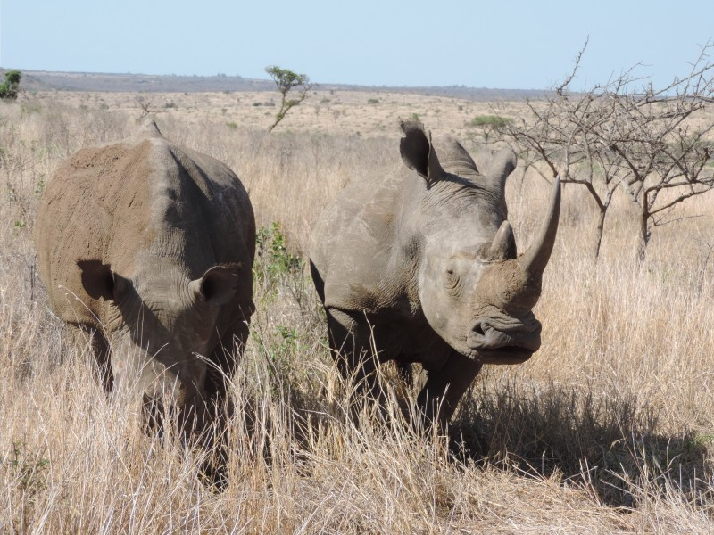 animal-rhino-4.jpeg
