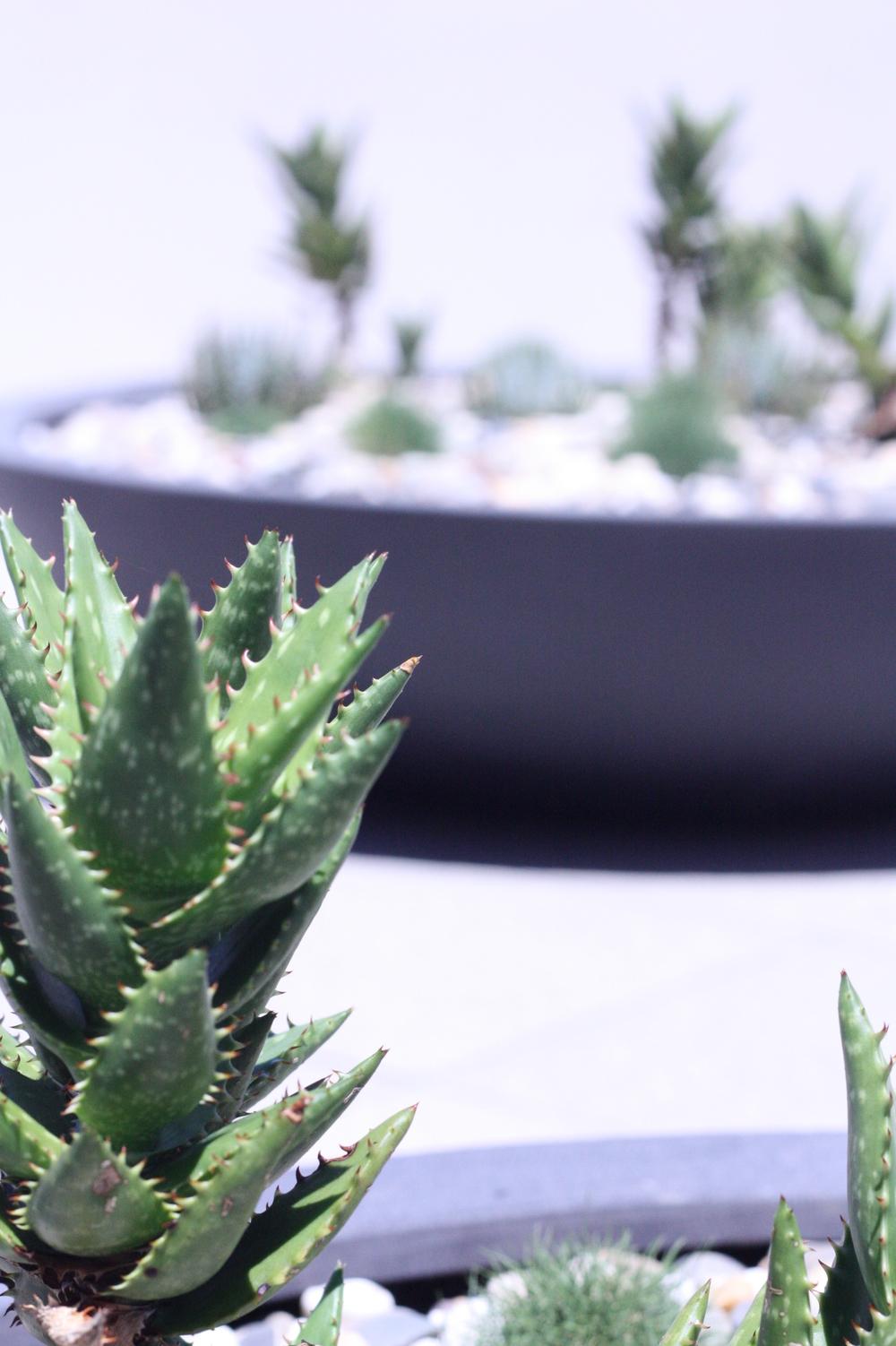 hamilton-rooftop-landscape-design-SEED10.JPG