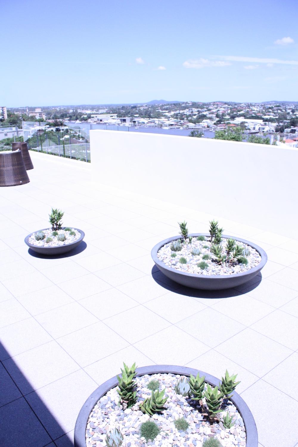 hamilton-rooftop-landscape-design-SEED3.JPG