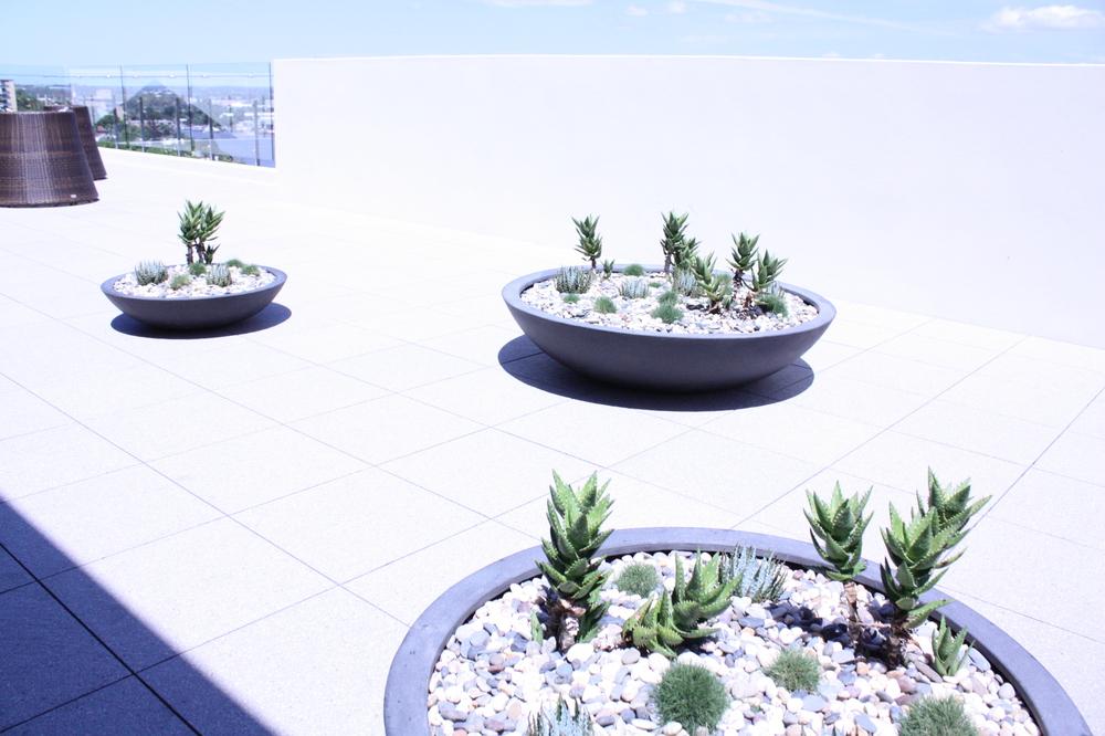 hamilton-rooftop-landscape-design-SEED13.JPG