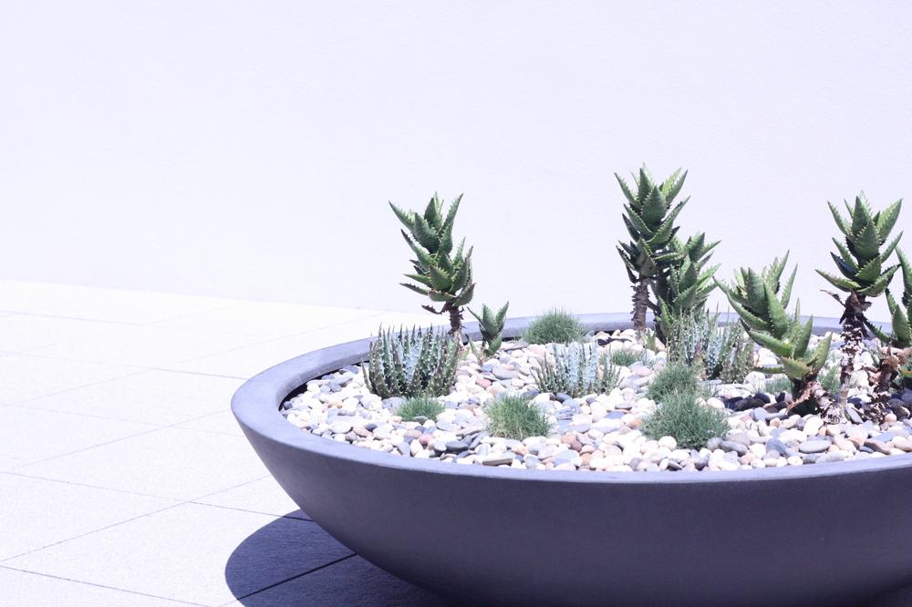 hamilton-rooftop-landscape-design-SEED14.JPG