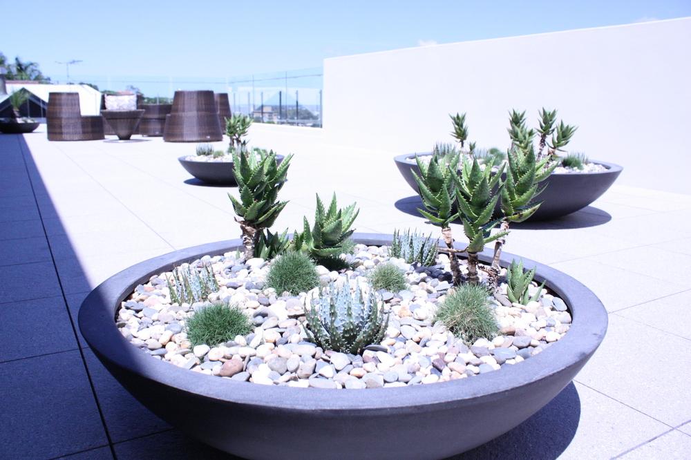 hamilton-rooftop-landscape-design-SEED4.JPG