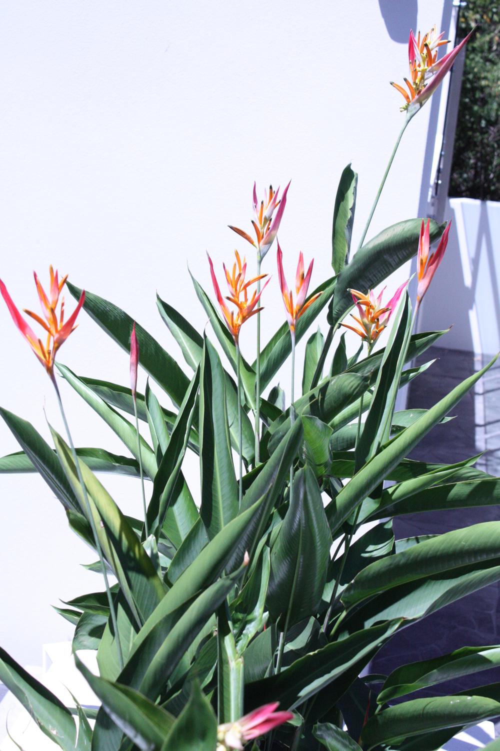 Hamilton-landscape-design-planter-box-SEED4.JPG