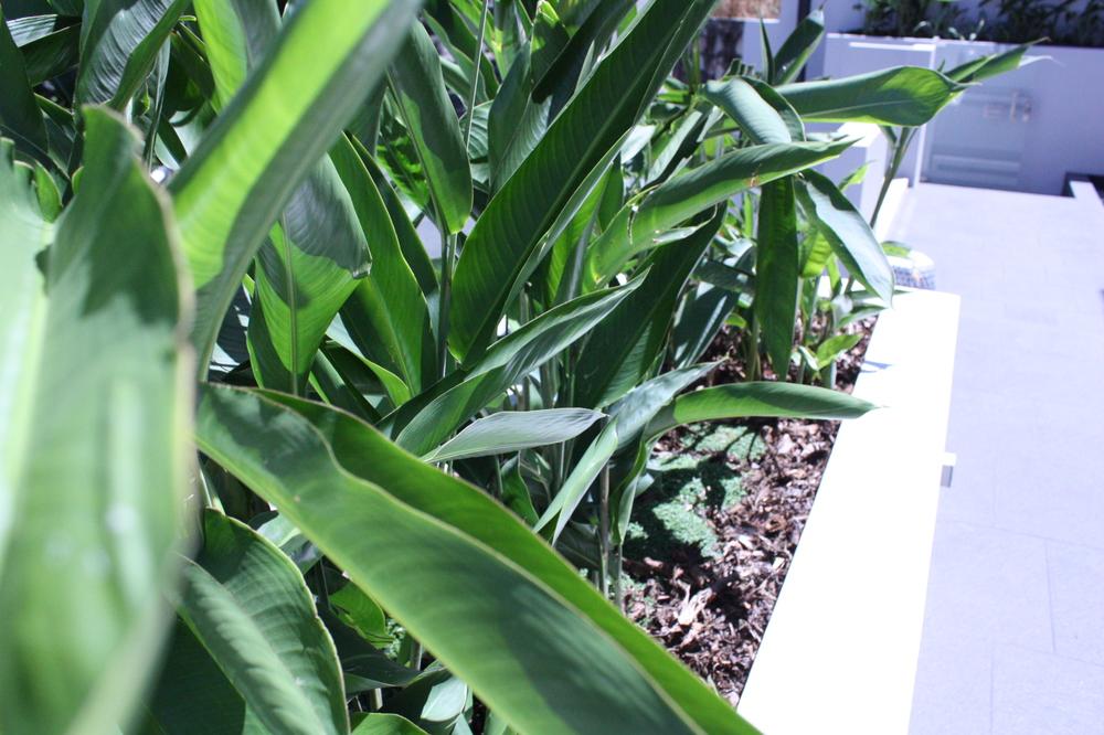 Hamilton-landscape-design-planter-box-SEED5.JPG