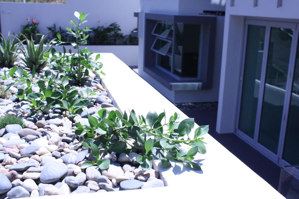 Hamilton-landscape-design-planter-box-SEED7.JPG